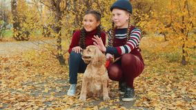 Two girl teenagers sitting with cocker spaniel dog in autumn park. Smiling girls stroking dog and posing for camera in