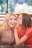 Two girlfriends communicating in cafe Stock Images