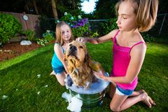 Two girls bathing their dog Royalty Free Stock Photo