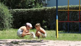 Two girls cares a dog. Children with dog-Two girls caress dog stock video footage