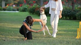 Two Girls With Dogs. Two girls playing with their dogs in the park stock footage
