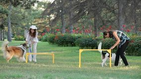 Two Girls With Dogs. Two girls playing with their two dogs in the park stock footage