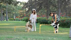 Two Girls With Dogs. Two Women playing with their two dogs in the park stock video footage