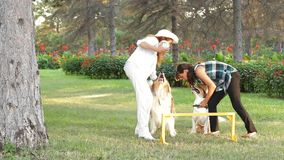 Two Girls With Dogs. Two Women playing with their two dogs in the park stock footage