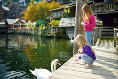 Free Two Girls Feeding Swans In Hallstatt Lakeside Town In The Austrian Alps In Beautiful Evening Light On Beautiful Day In Autumn Stock Photos - 113183523