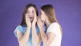 Two Girls Gossiping. Woman with long dark hair telling a secret to attractive brunette in light blue t-shirt, isolated shot in the purple background, concept of stock footage