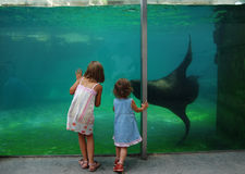 Two girls looking at the aquarium Royalty Free Stock Images