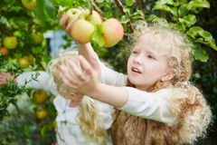 Two girls picking up apples stock photography