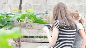 Two girls playing cell phone on nature stock video footage