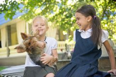 Two girls playing with a dog Stock Images