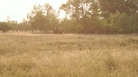 Two girls riding horses in field at sunset, slow. stock video