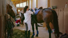Two Girls Stable Horse stock footage