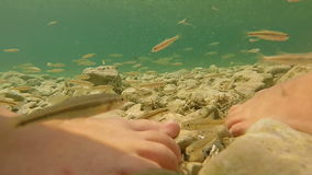Two girls standing in shallow water surrounded by fish stock video
