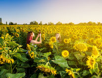Two girls taking pictures in the sunflower field Stock Photos