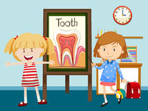 Two girls and tooth diagram Stock Photography