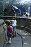 Two girls visiting aquarium. Two young girls visiting aquarium in Singapore studying fish through glass walls from the tunnel through the facility stock photo