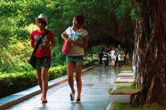 Free Two Girls Walking Under Canopy Tree During Drizzling Rain.. Stock Image - 126392311