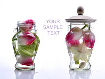 Two glass banks with tulips. Three glass banks with spring tulips and kiwi isolated on white Royalty Free Stock Photo