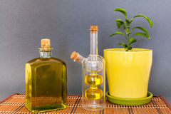 Two glass bottles olive oil stands near a flower against a dark background. Stock Images