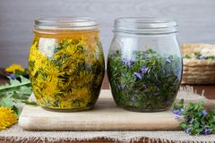 Two glass jars filled with booming ground-ivy, dandelions and ho Stock Photos