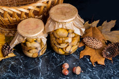 Two glass jars with wild marinated mushrooms on black marble bac Stock Images
