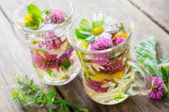 Two glass mugs of healthy herbal tea. Medicinal herbs on table. royalty free stock photography