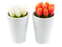 Two glass with tulip in the manner of candles Royalty Free Stock Images
