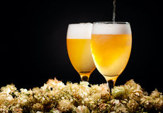 Two glasses of beer flow with hop Royalty Free Stock Photo