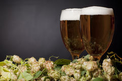 Two glasses of beer froth with hop Royalty Free Stock Images