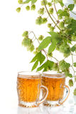 Two glasses of beer and hop plant Royalty Free Stock Photo