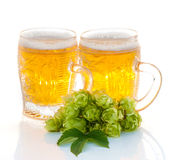 Two glasses of beer and hop plant Stock Images