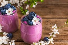Two glasses of blueberry yogurt with fresh blueberries and spring flowers on rustic wooden background. Close up royalty free stock image