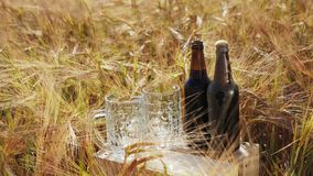 Two glasses and bottles of dark beer stands on a wooden box in the field. Two glasses and bottles of cold dark beer stands on a wooden box in the middle of the stock video footage