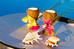Two glasses of coconut with orchids and two seashells Royalty Free Stock Photos