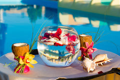 Two glasses of coconut with orchids, two seashells in a fishbowl Royalty Free Stock Photos