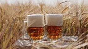 Two glasses of cold beer stands on a wooden box in the field. Two glasses of cold beer stands on a wooden box in the middle of the ripened barley in the field stock video