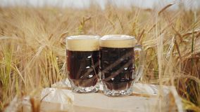 Two glasses of dark beer stands on a wooden box in the field. Two glasses of cold dark beer stands on a wooden box in the middle of the ripened barley in the stock video footage