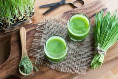 Two glasses of green juice with freshly harvested barley grass. In the background Royalty Free Stock Photos