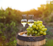 Two glasses of liquor or grappa with bunch of grapes. Against green background of the vineyard Stock Photography