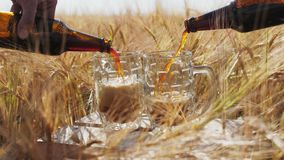In two glasses pour cold dark beer from bottles. In two glasses pouring cold dark beer from bottles against the background of ripe barley spikes on the field stock video
