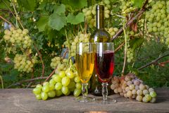 Two glasses of red and white wine and a bunch of grapes on old wooden table against vineyard royalty free stock images