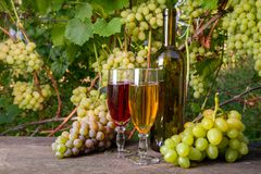 Two glasses of red and white wine and a bunch of grapes on old w stock images