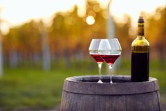 Two glasses of red wine and bottle in vineyard. Two glasses of red wine and bottle in autumn vineyard Royalty Free Stock Photo