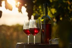 Two glasses of red wine and bottle in the vineyard Royalty Free Stock Images