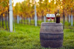 Two glasses of red wine on a wooden barrel. In an autumn vineyard stock photos