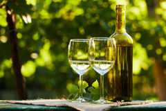 Two glasses of white wine Stock Photos