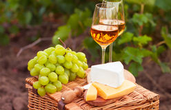 Two glasses white wine, various sorts of cheese and grapes on th. E background of green grape leaves Royalty Free Stock Photography