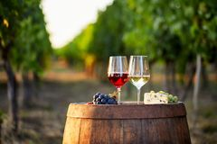 Two glasses of wine with food on a barrel. In a vineyard royalty free stock photo