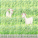Two goats in the farm vector illustration