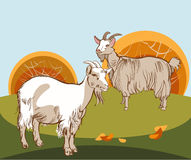 Two goats to the pasture Stock Photo